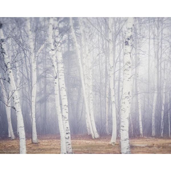 Birch Tree Art Print, Winter Art, Nature Photography Print, Tree... ($15) ❤ liked on Polyvore featuring home, home decor, wall art, art, birch tree wall art, photo wall art, photo-print and birch tree home decor