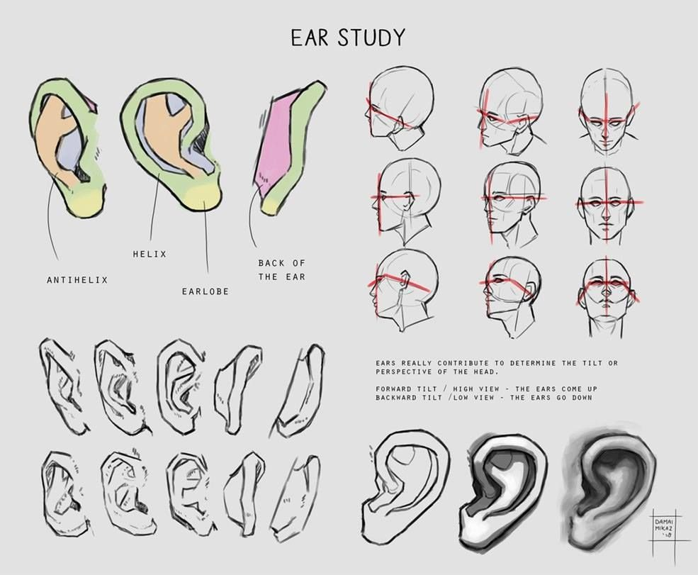 Ear Study For Artists Art Tutorials Anatomy Art Art