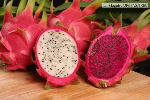 13bac021f2301 Pitahaya (Fruta del Dragón) Esta creo que es algo conocida... pero vale la  pena mencionarla. Fue descubierta por primera vez en forma silvestre por  los ...