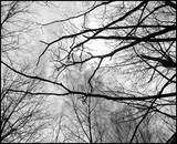 Cloudy branches