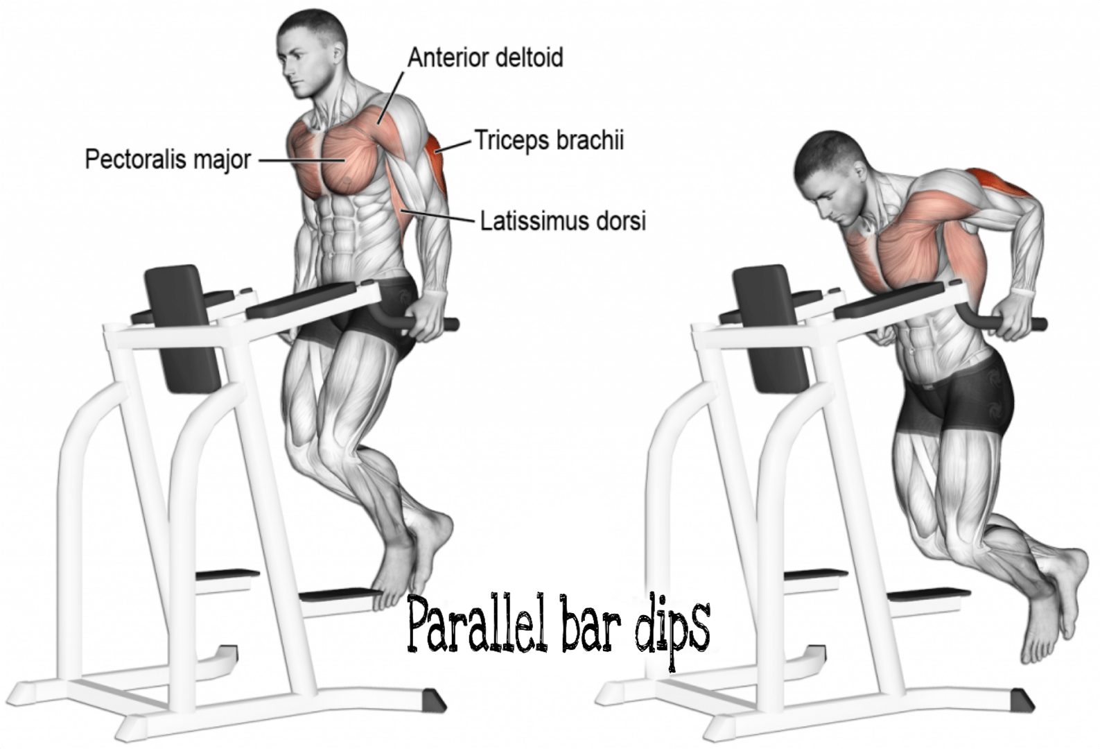 Pin On Chest Workout