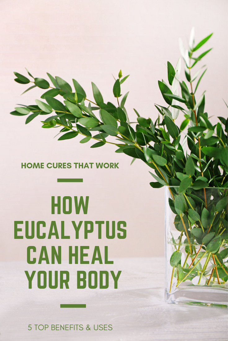 If You Ve Ever Been Lucky Enough To Walk Past A Eucalyptus Tree Then You Know It S An Amazing Feeling Breathing In The L Body Aches Remedies Eucalyptus Health