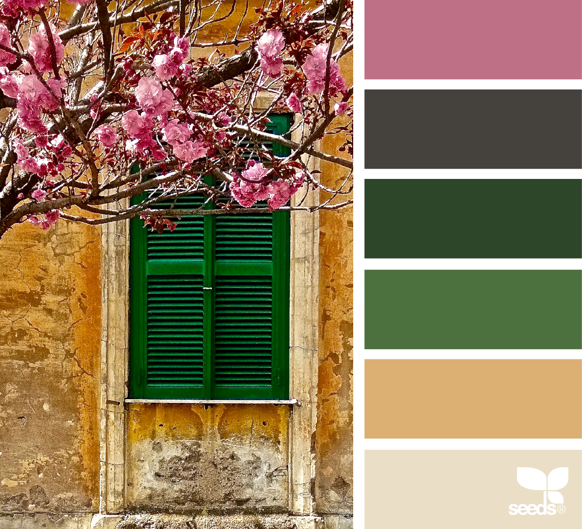 Color view design seeds color inspiration and color combos color view nvjuhfo Images