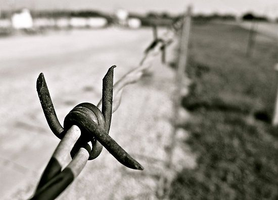 Barbed wire is like life, some parts are smooth and other parts cut