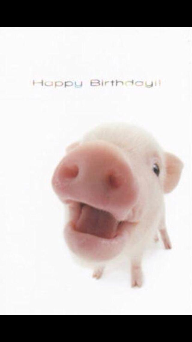 birthday pig screen saver pigs pinterest birthday pig mini