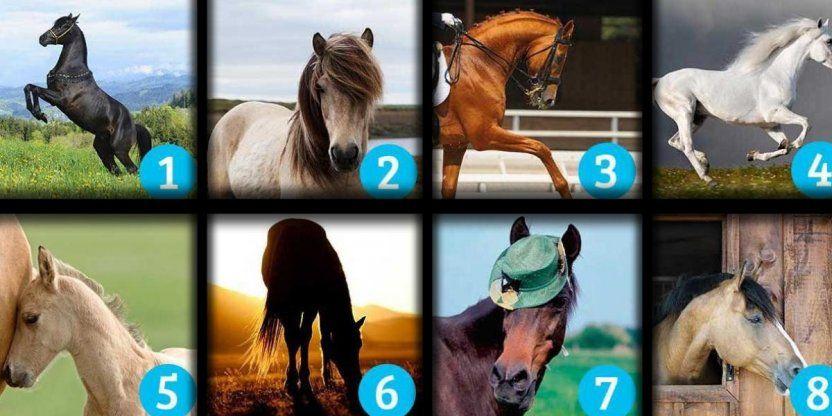 ¿Qué caballo te gusta más? El que escojas habla sobre tu SUERTE…