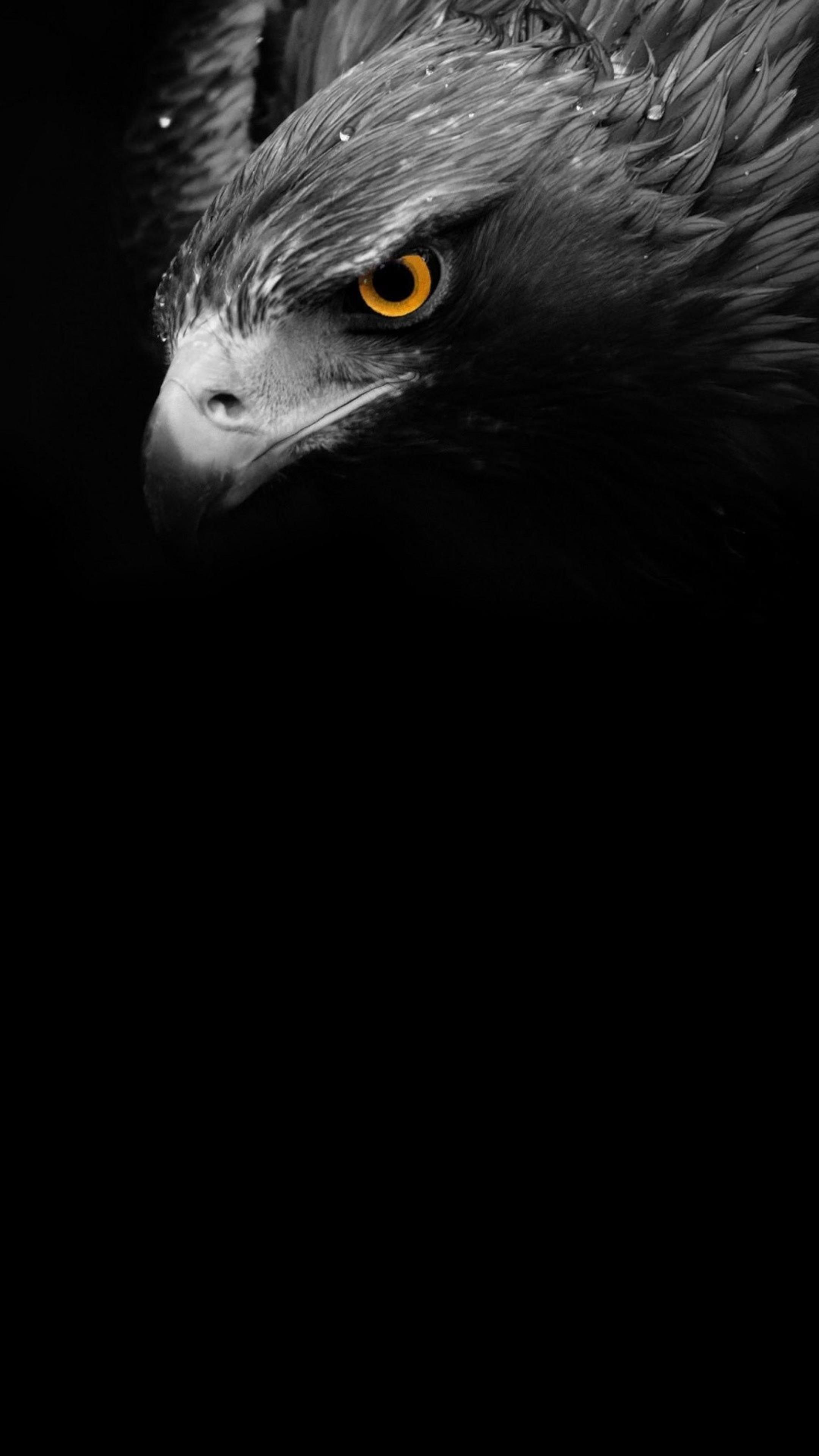 Amoled Animal Wallpaper Eagle Wallpaper Eagle Pictures Eagle Painting