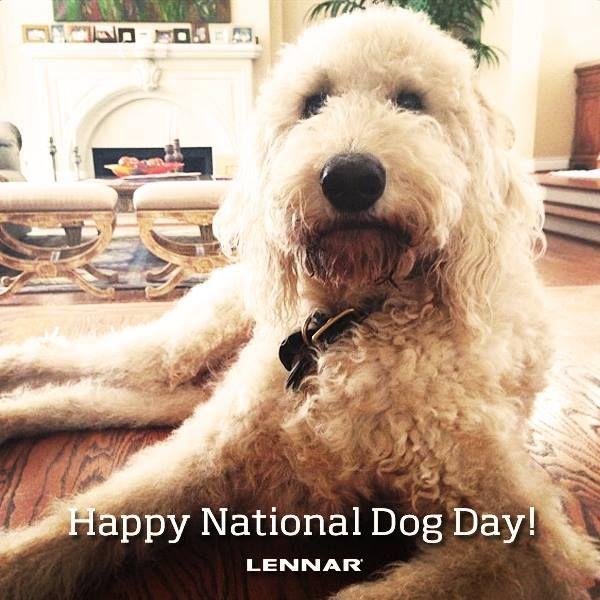 Happy National Dog Day Dogs Nationaldogday Happy National Dog Day Dogs Dog Days