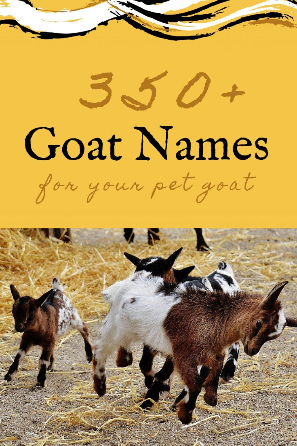 350+ Pet Goat Names for Your New Goat (From Angus to