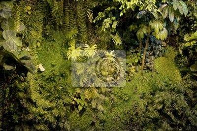 Papier Peint Mur Vegetal 4588 Vitrine Vegetale En 2018 Papier