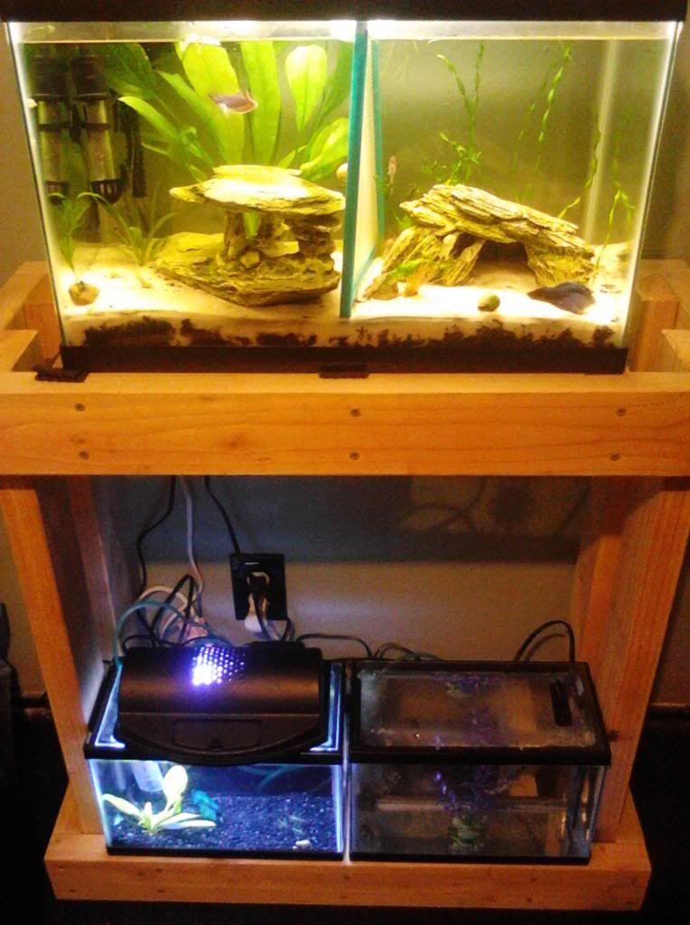 Diy 20 gallon long fish tank stand build aquarium for 20 gallon long fish tank
