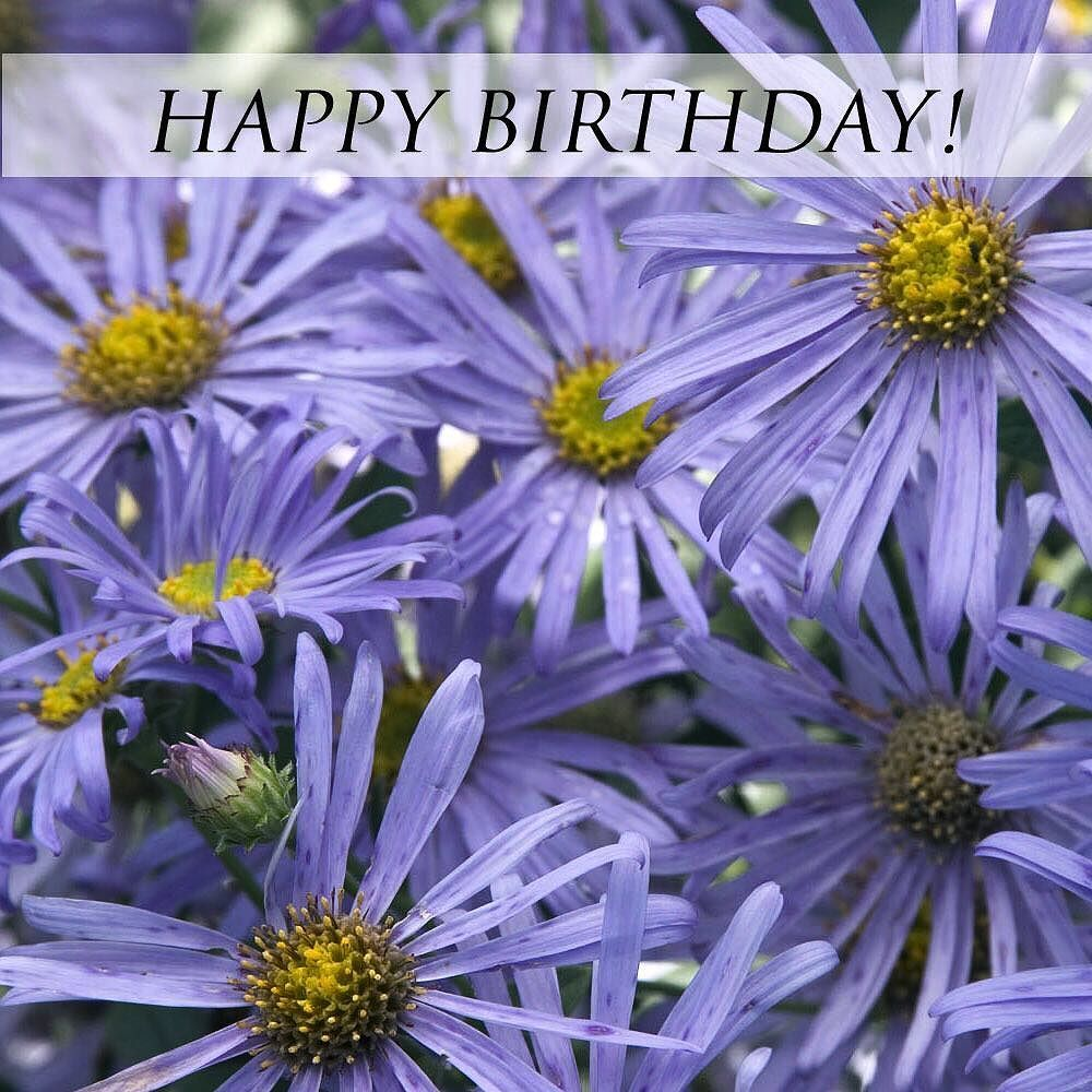 Happy Birthday To All Of Our September Gardeners Aster Or September