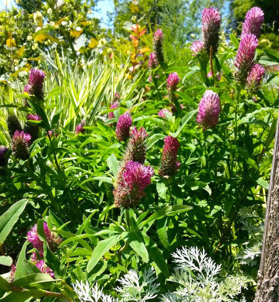 plantes vivaces-les jardins des hurlevents