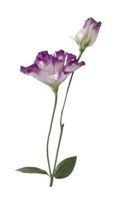 Care Instructions For A Lisianthus Plant Ehow Lisianthus Plants Flower Farm