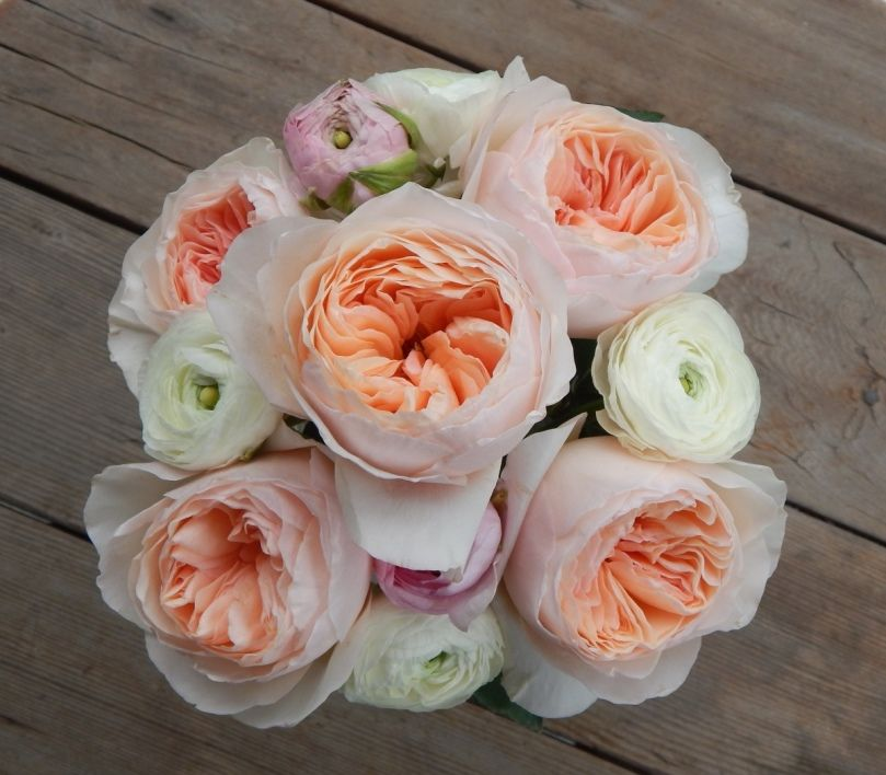 Peach Garden Rose garden roses! - blog - iconic flowers and events | bride's bouquet