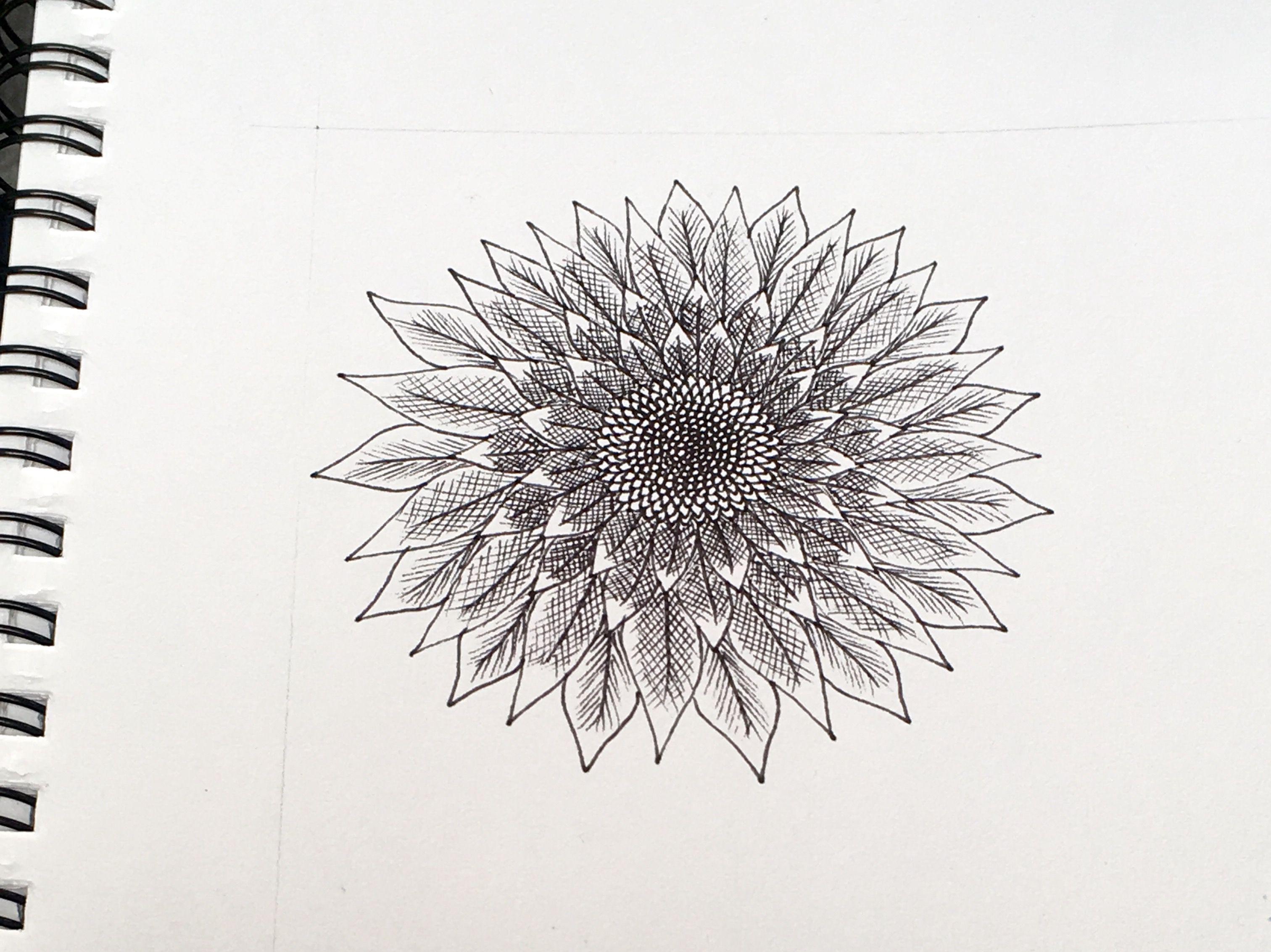 Sunflower Line Drawing : Sunflower doodle in progress 1 art pinterest