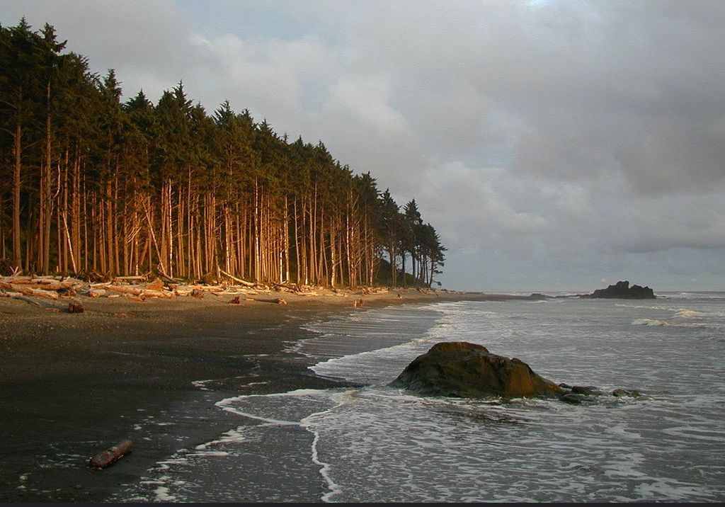 Beach at Olympic National Park