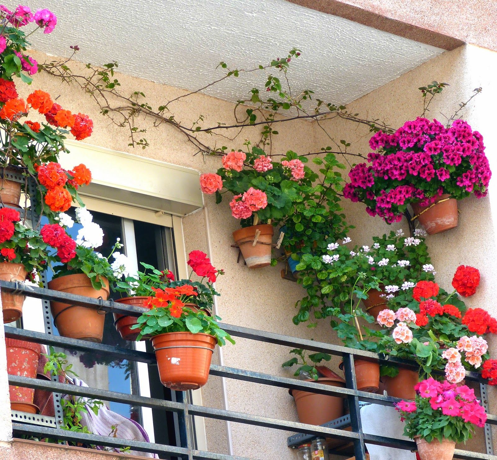 Tarragona in balcones floridos out pinterest for Plantas colgantes para balcones