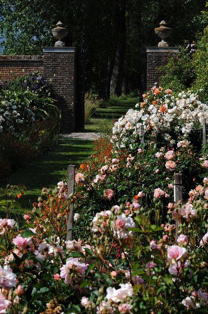 Rymans Open Garden Rose Garden Design Beautiful Gardens Garden Inspiration