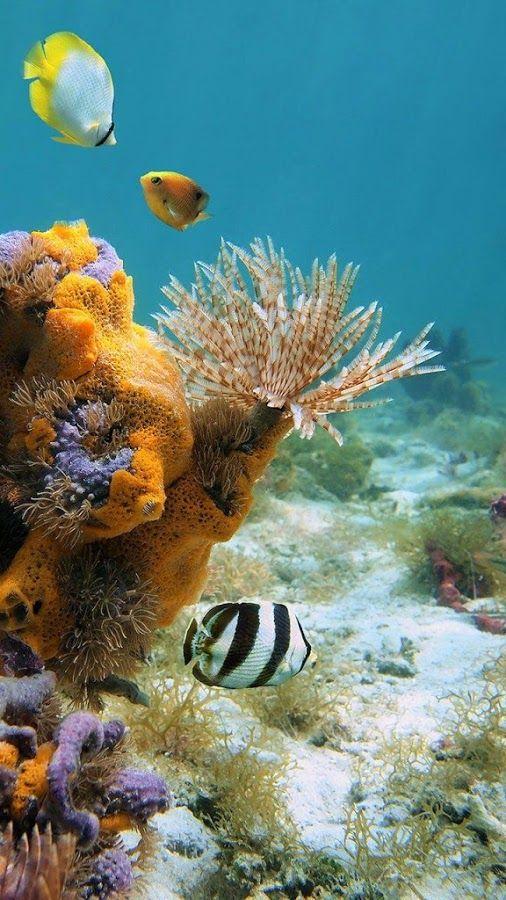 Dominik Deisl Google Sea Fish Pet Sea Sponge