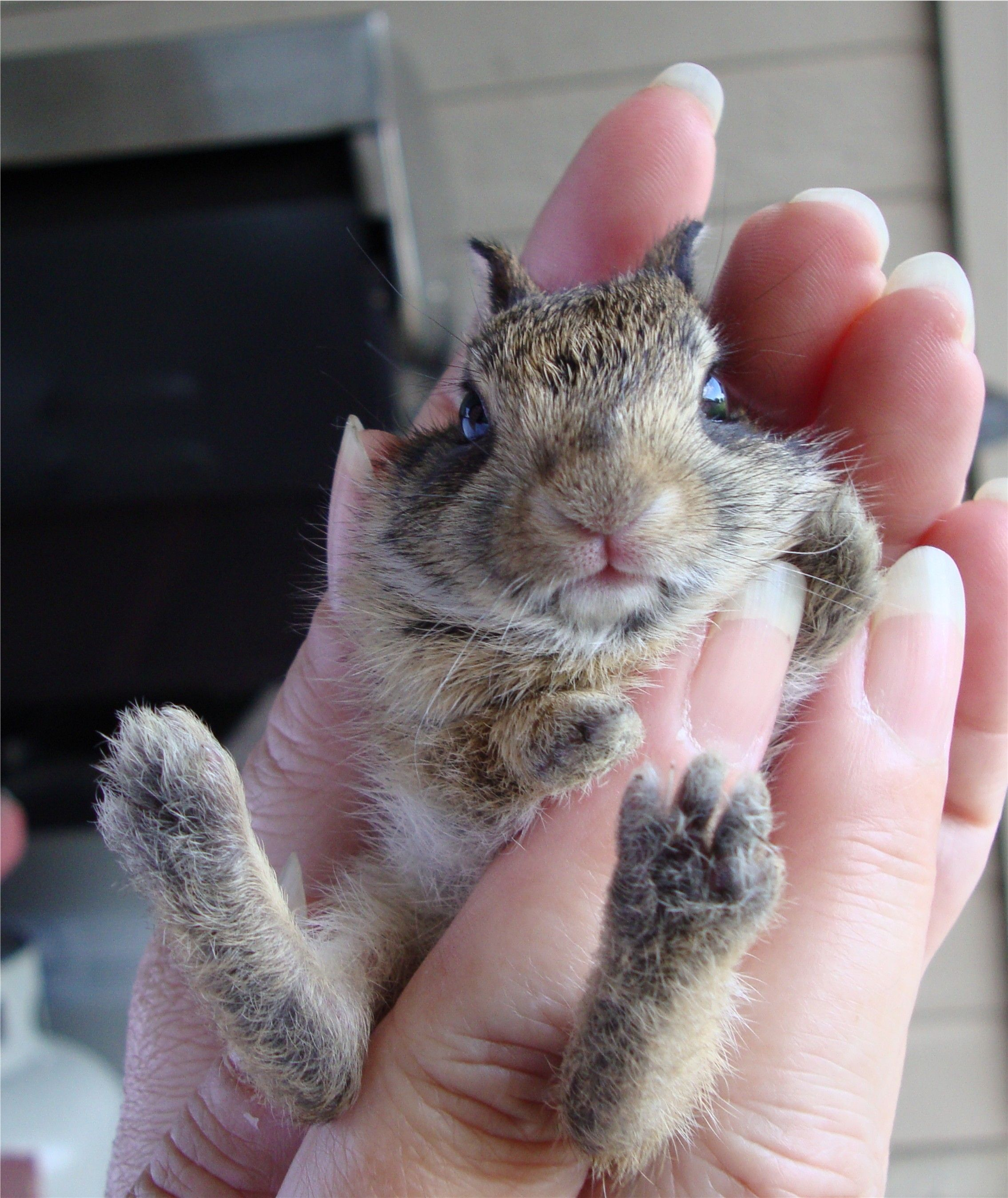 Every year rabbits have babies in the big flower pots in ...