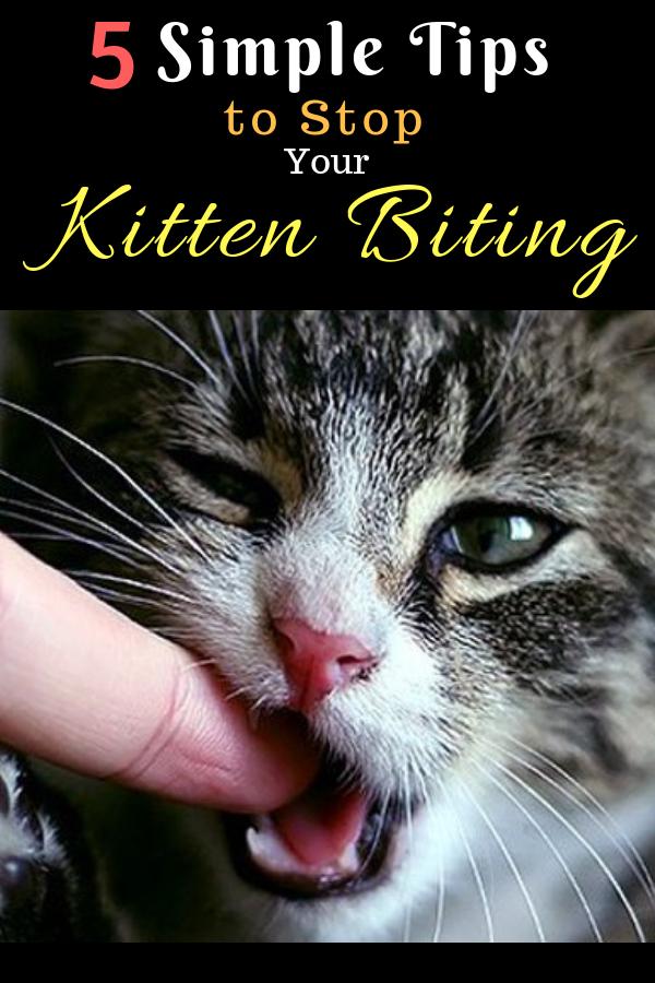 5 Simple Tips To Stop Your Kitten Biting Kitten Biting Cat Care Cat Biting