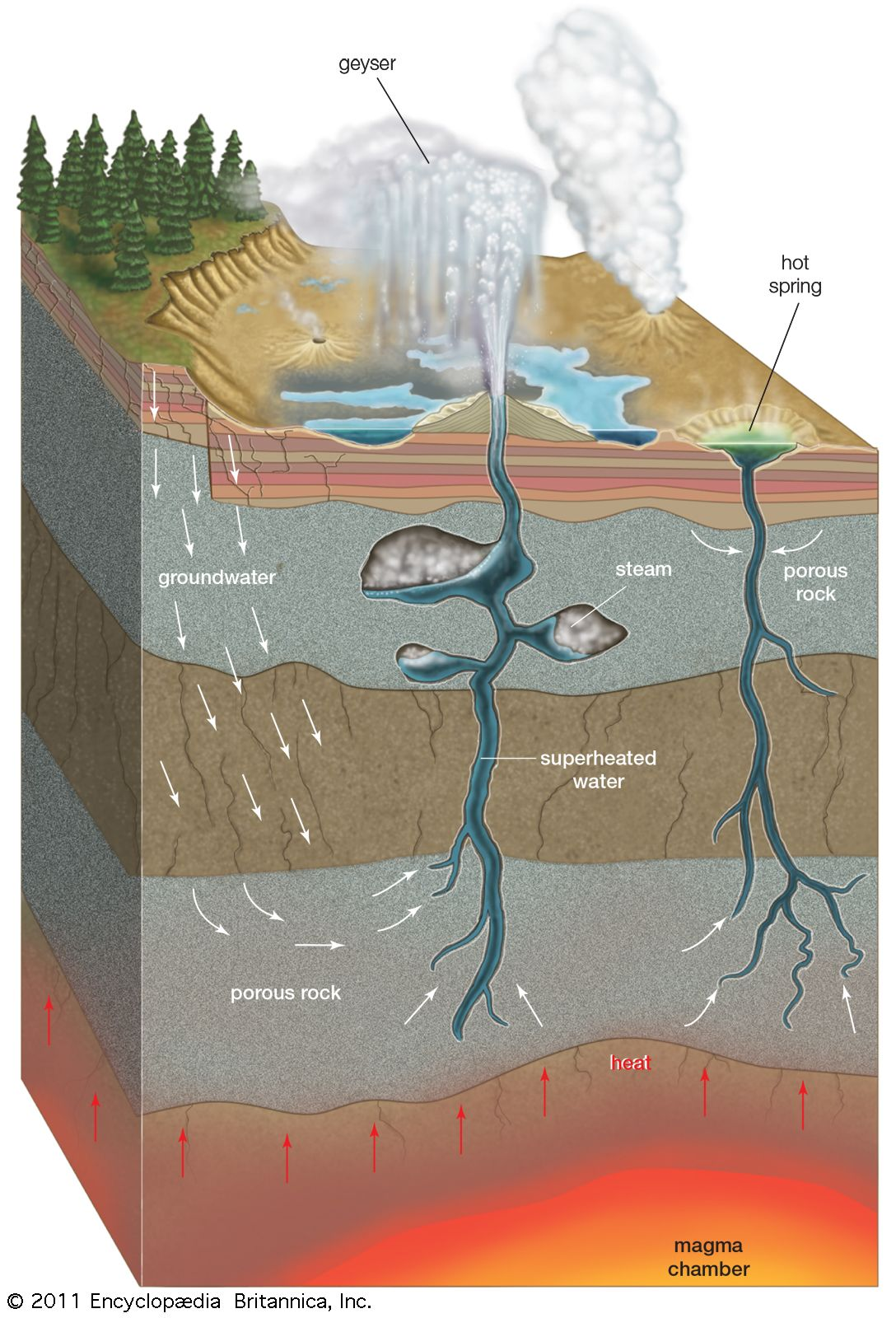 Cross Section Of A Geyser And Hot Springgroundwater