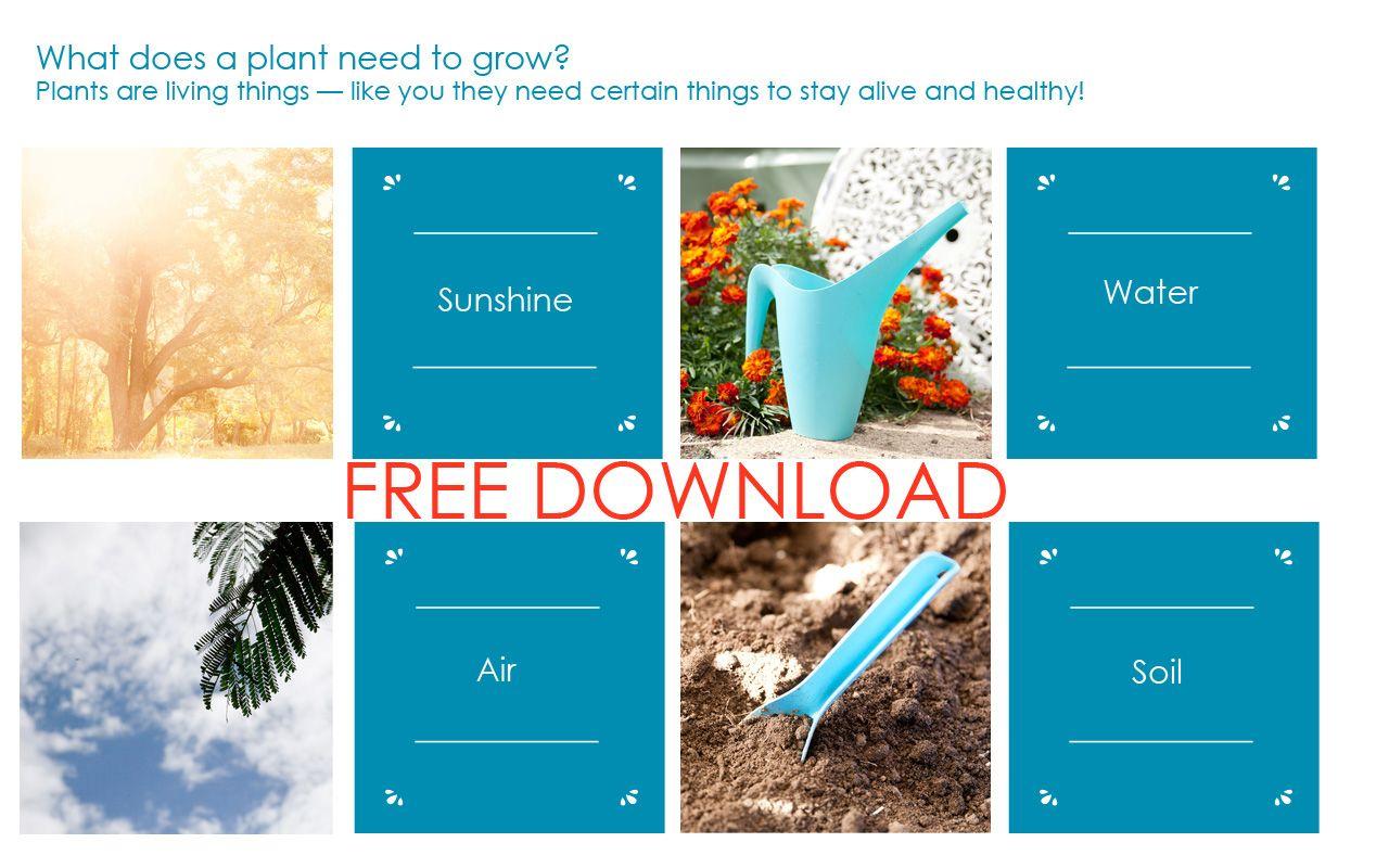 FREE Montessori inspired printables — What do plants need ...
