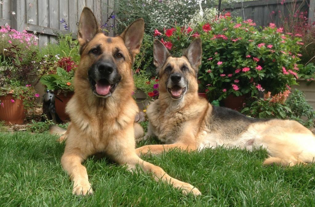 Finn And Granite Courtesy Of Christine K From Munster In Dog