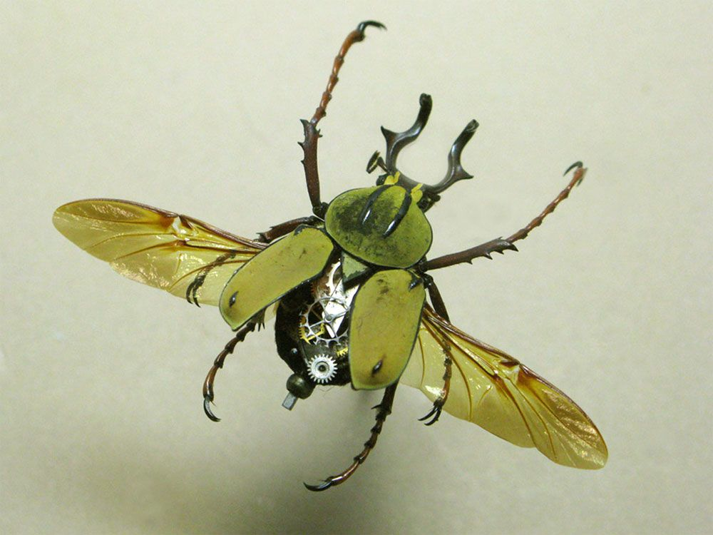 Картинки по запросу Robots Like Insects