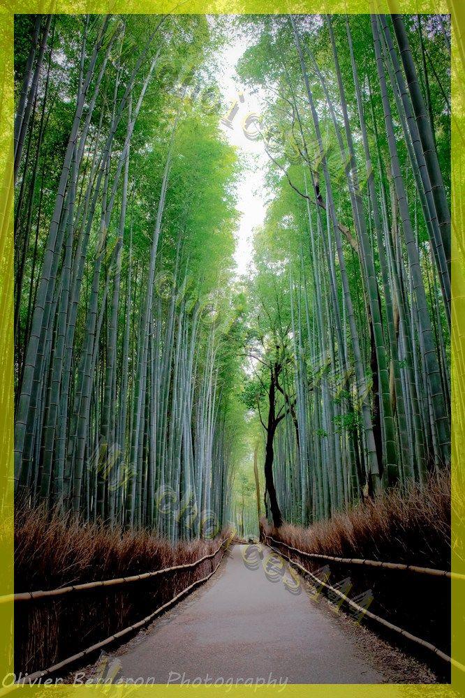 fairy season coupon free shipping in 2020 Japan travel