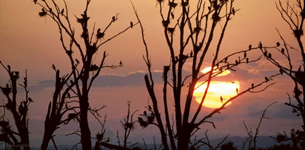 Kormorane, einst heimisch in Ostasien, haben sich längst der mitteleuropäischen Landschaft angepasst wie diese Brutkolonie auf der Insel Rügen. – Diese Karte hier online kaufen: http://bkurl.de/pkshop-211013 Art.-Nr.: 211013 Sonnenuntergang auf Rügen | Foto: © U. Walz | Text: Rolf Bökemeier