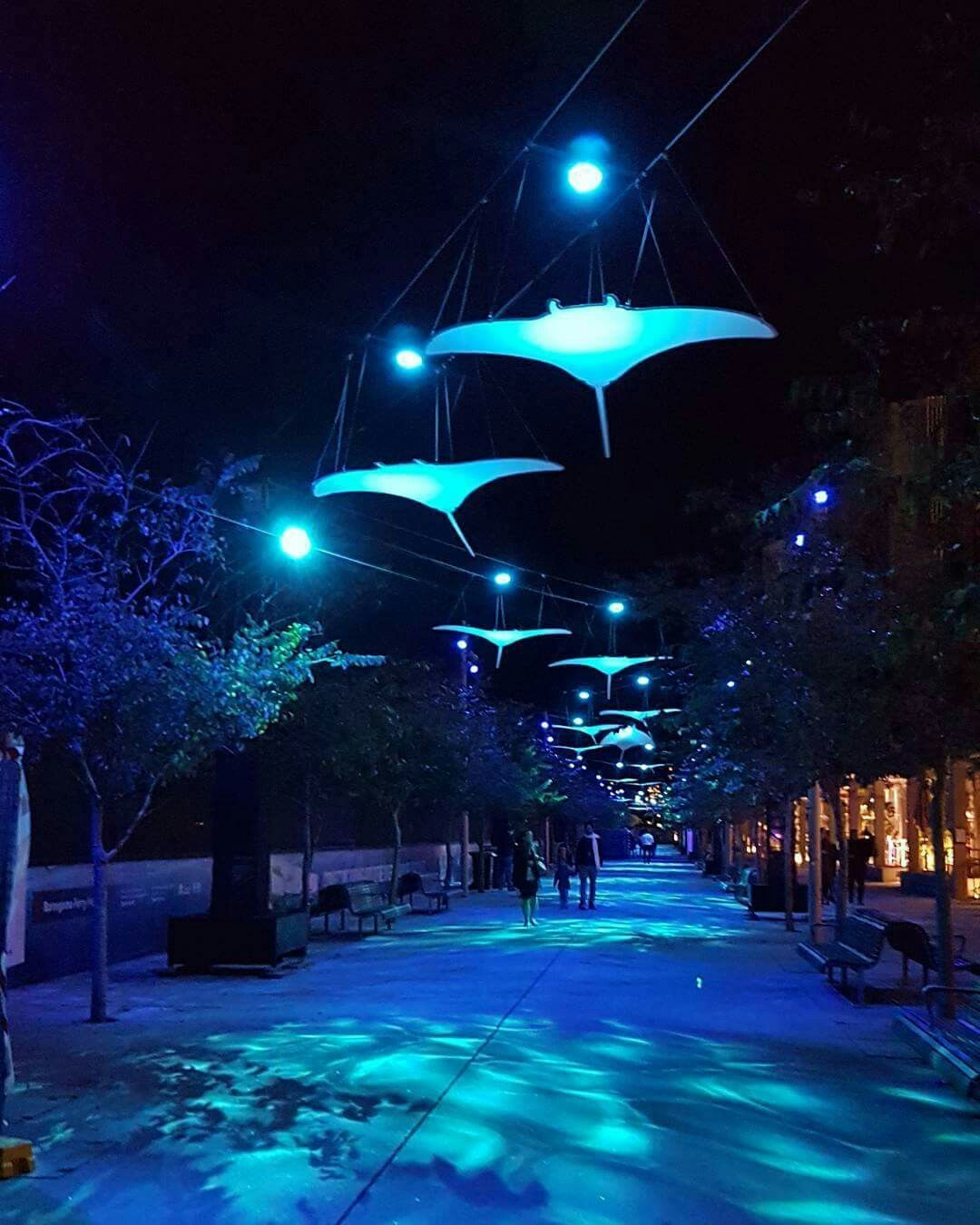 Vivid Sydney Barangaroo Festival Lights Australia Travel Australia