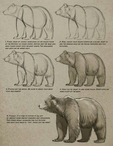Aaron Blaise | Animal References for Animation & Ilustration ...