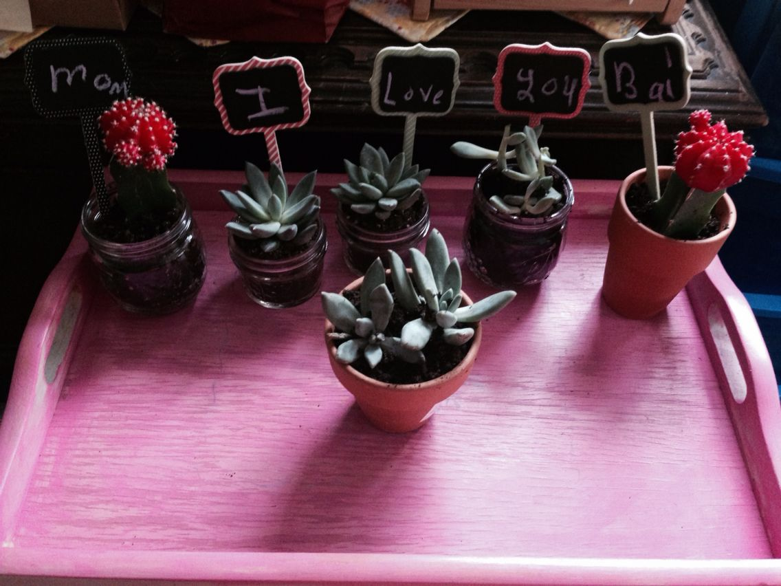 Mother's Day cactus DIY