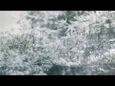 William Josh Beck à l'Antipode pour présenter Of Birdland son nouvel album - http://www.unidivers.fr/william-josh-beck-antipode-folk-album-of-bidrland/ - Musique, Rennes Bretagne -  Antipode, folk, of birdland, Rennes, Turn ! Turn ! Turn ! Records, william josh beck
