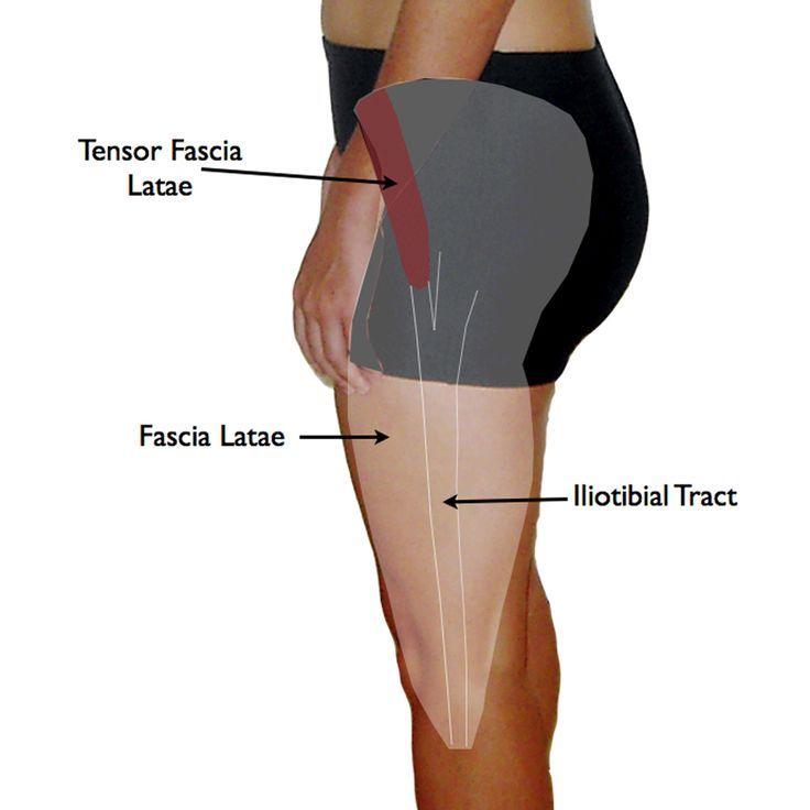Tensor Fascia Latae Anatomy.002   Trigger pointes   Pinterest   Hip ...