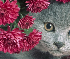 Pets & Animals Facebook Covers - myFBCovers