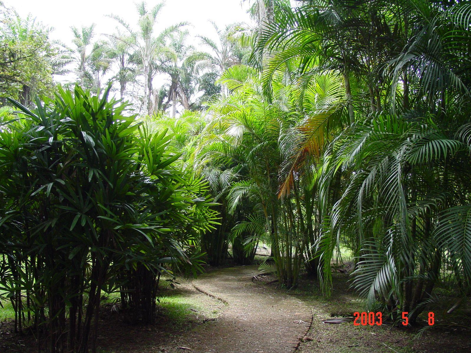 Nice Indoor Botanical Gardens   Google Search