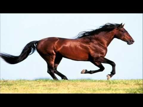 sonido caballo relinchando