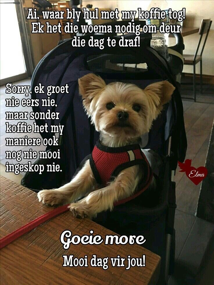 Pin By Corlia Janse On Afrikaans Yorkie Giant Animals Cute Dogs