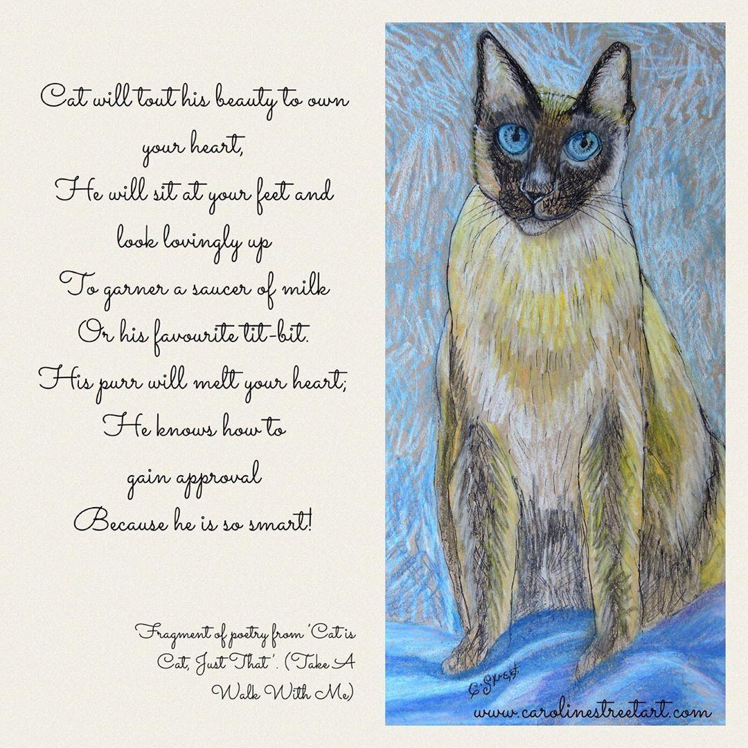 "Caroline Street on Instagram: ""#fragment of #poetry from 'Cat is Cat, just That. #takeawalkwithme #catpoem #petsofinstagram #animalpoetry #siamesecatsofinstagram…"""