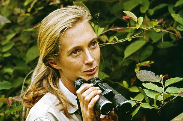 One of my heroes: The wonderful and formidable Jane Goodall.