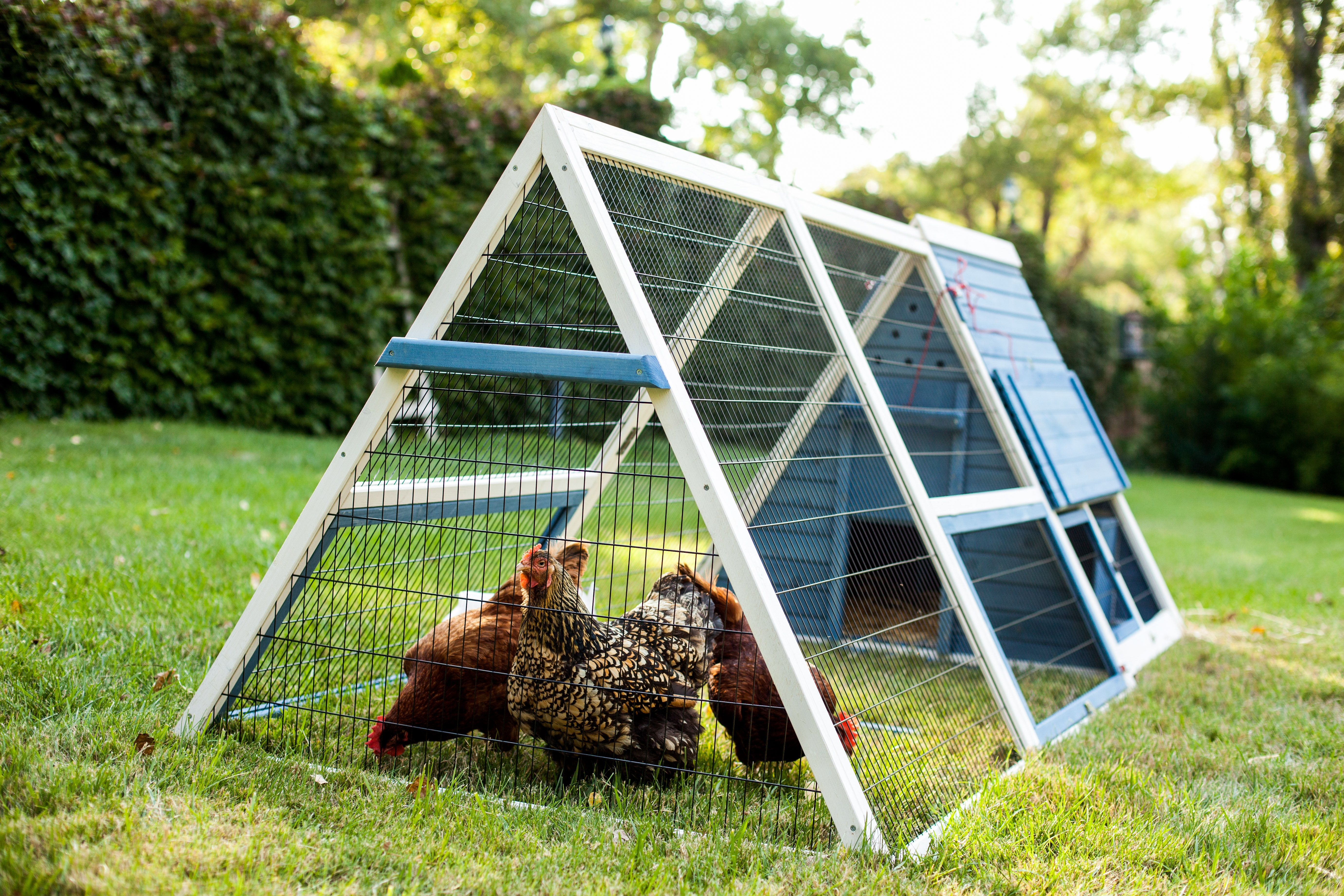 The A Frame Chicken Coop From Advantek This Beautiful Blue