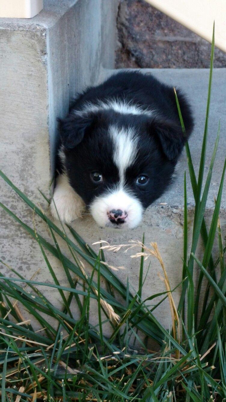 Idaho Shag Lab Cross Cutelilpuppy With Images Dog Breeds