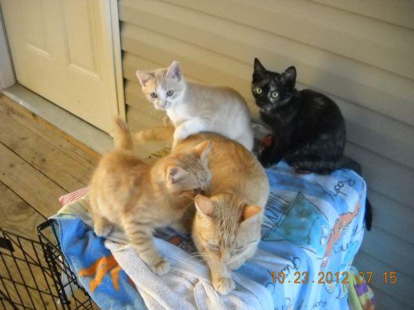 3 Kittens And A Mama Cat Branson Craigslist Mama Cat Cats