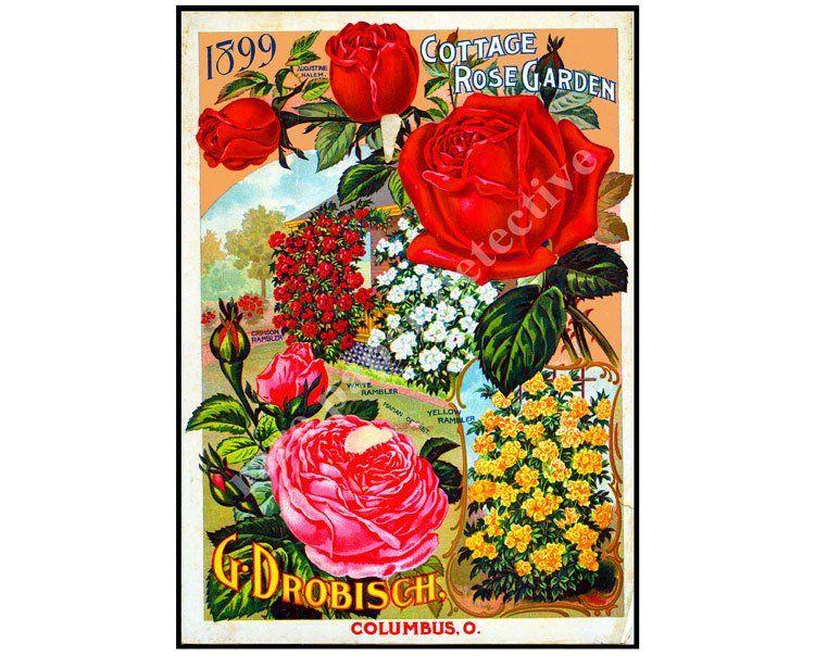 Garden Catalog Cover, 5\