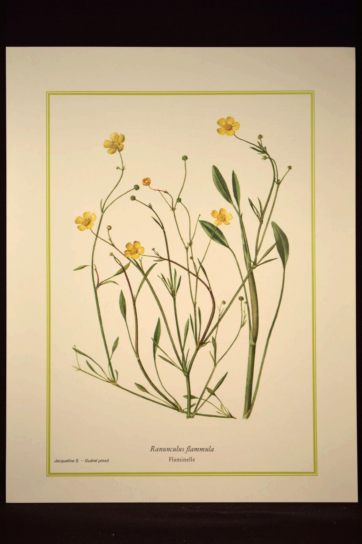 Buttercup Print Yellow Flower Print Nature Wall Art | Nature / Home ...