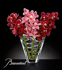 Truly Captivating Cymbidium Orchid Bouquet in Baccarat® Crystal Vase