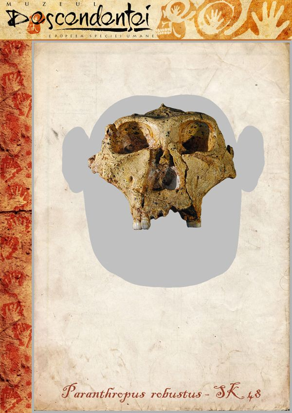 Paranthropus robustus - SK-48 - reconstruction by Eduard Olaru